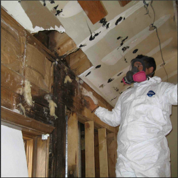 Mold Removal and Cleanup Vancouver