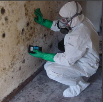 Mold Remediation and Inspection Vancouver
